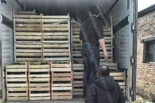 ВРостовской области уничтожено практически 4 тонны подозрительных овощей
